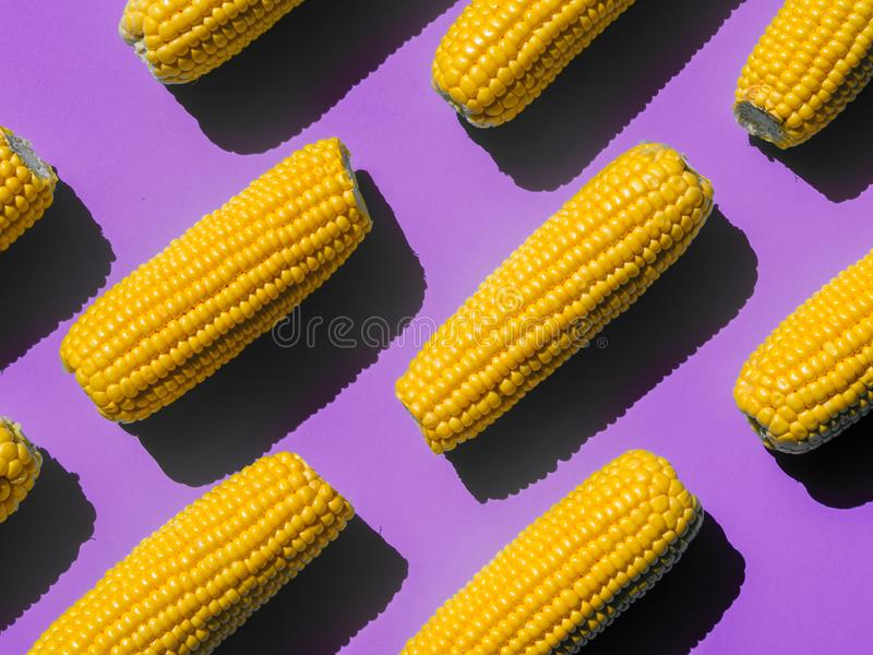 Boiled corn heads pattern on a yellow background. Isometric view with pop violet background stock photography