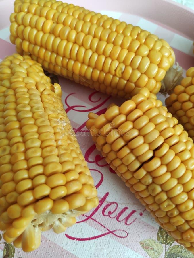 Boiled corn stock image