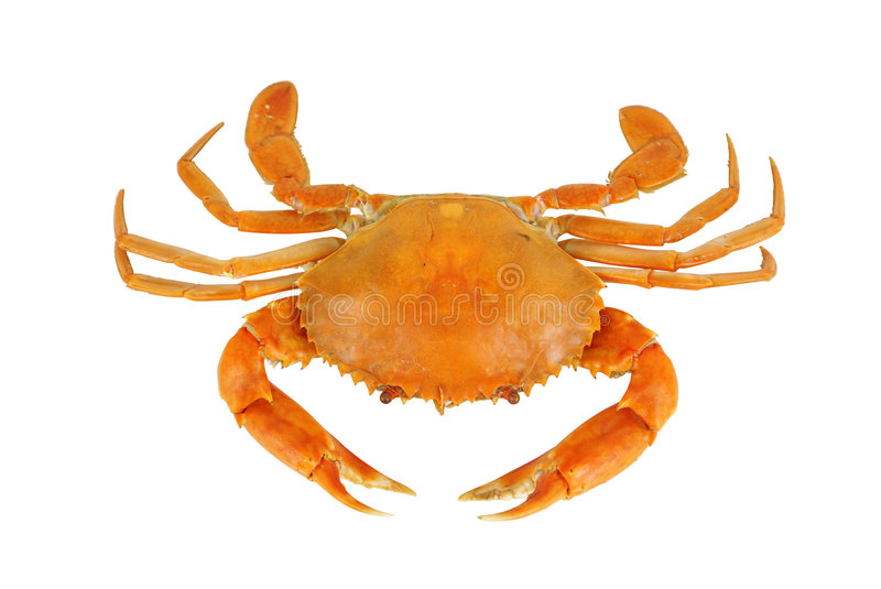 Boiled crab royalty free stock photography