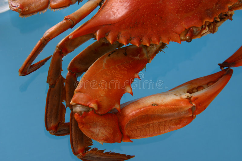 Boiled Crab Abstract stock image