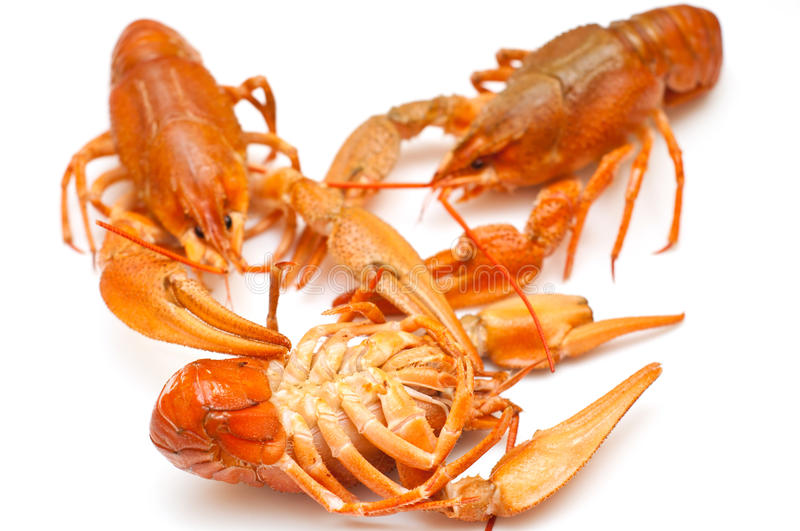 Download Boiled crawfish stock photo. Image of chitin, live, claw - 20031788