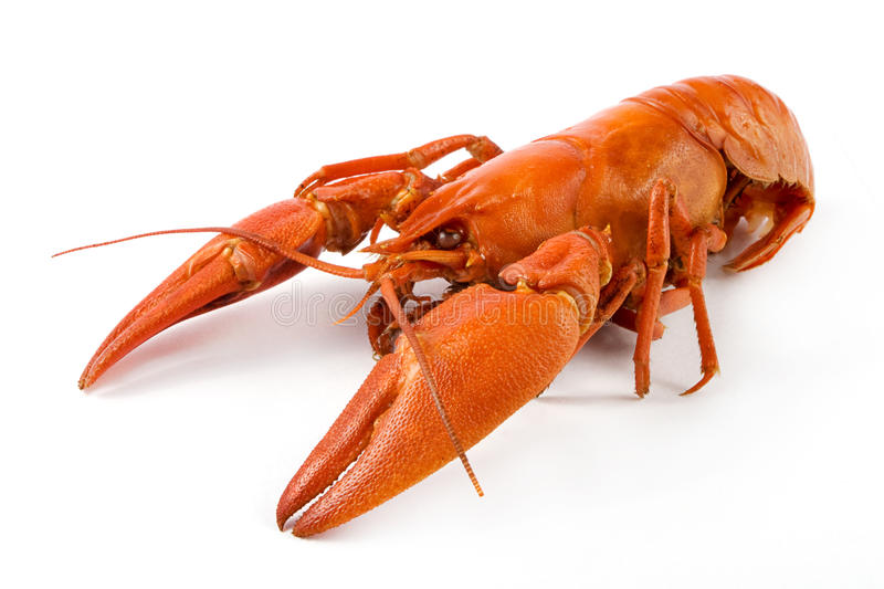 Boiled crawfish over white royalty free stock photography