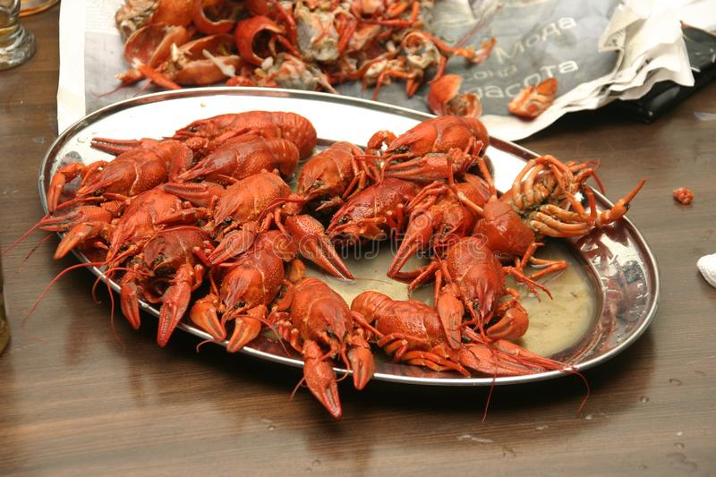 Boiled crawfish on a plate. Spicy boiled crawfish on a plate in Rostov stock photos