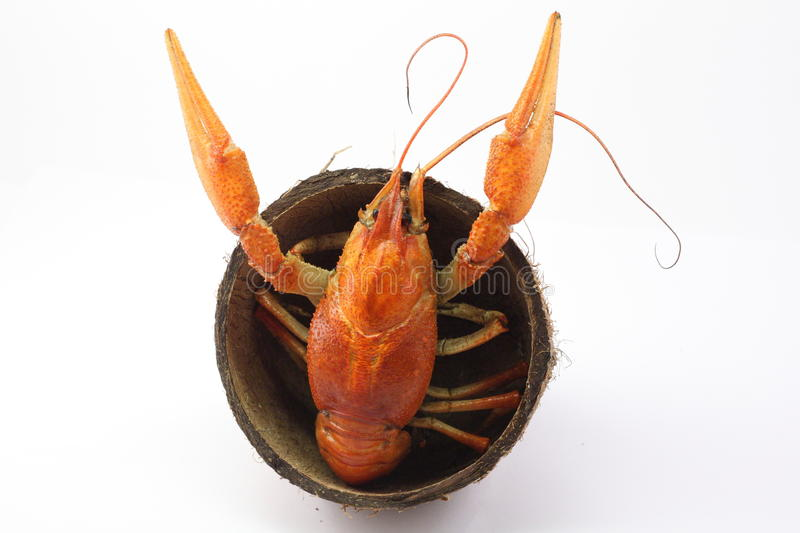 Download Boiled crayfish stock photo. Image of isolated, food - 11904566
