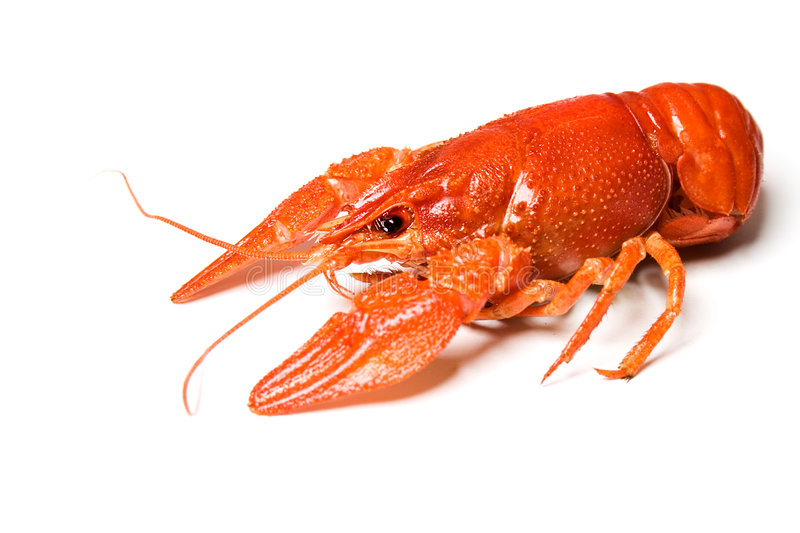 Boiled Crayfish Stock Image