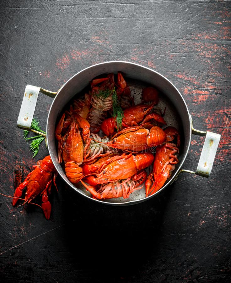 Boiled crayfish in a pan royalty free stock image