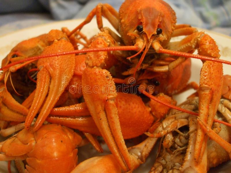 Boiled crayfish on a plate royalty free stock photography