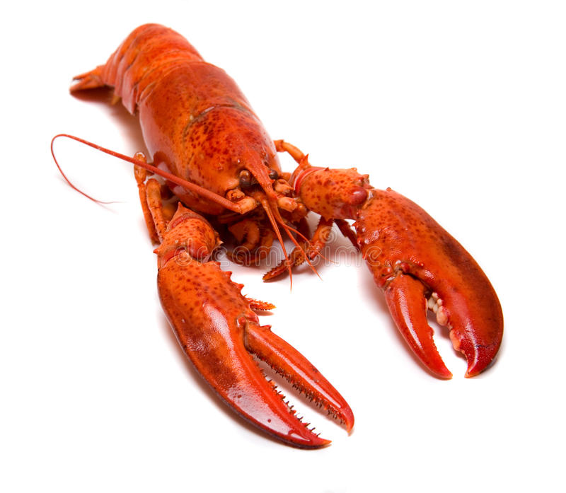 Download Boiled lobster stock image. Image of isolated, boiled - 16441131