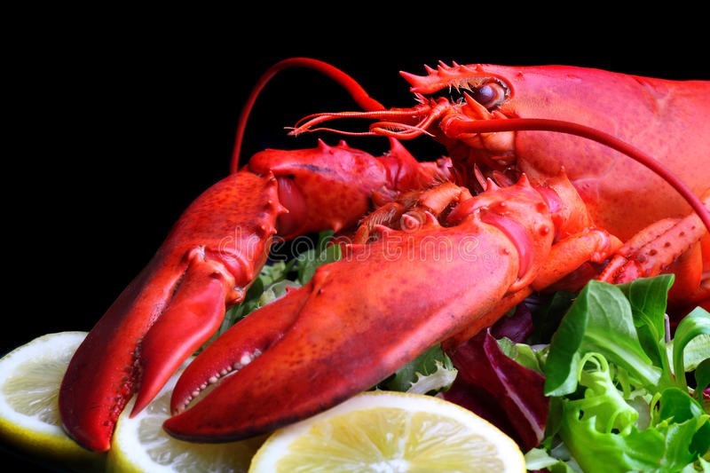 Boiled lobster stock images