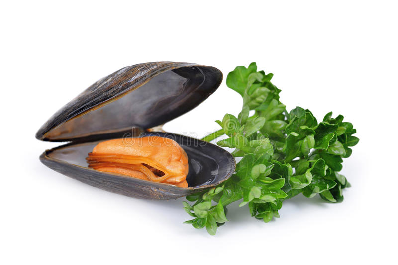 Boiled mussel. Isolated on a white background royalty free stock images