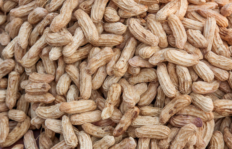 Boiled peanuts on the marke. stock photography