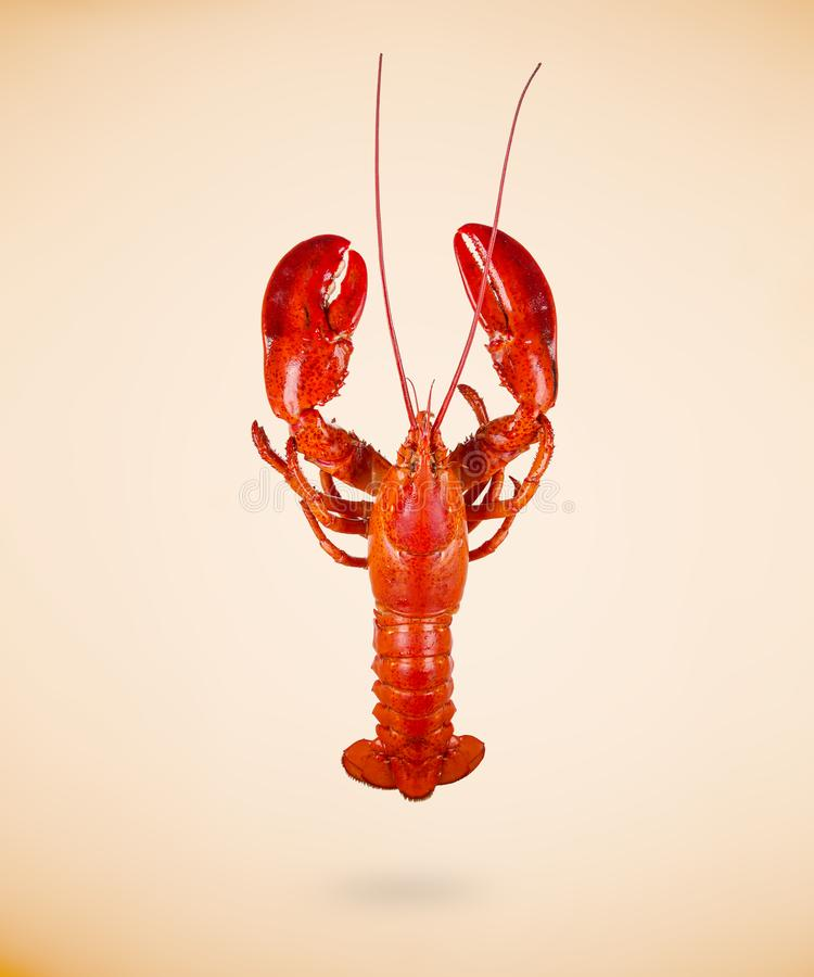 Boiled red lobster isolated on beige background stock photography