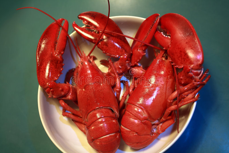 Boiled red lobsters royalty free stock photo