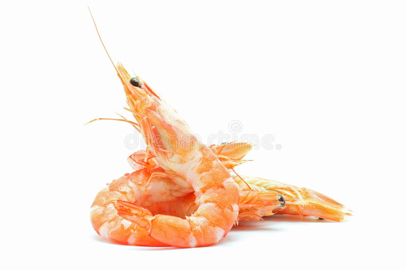 Boiled Shrimp royalty free stock image