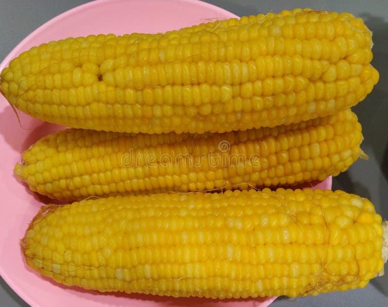 Boiled Sweet corns royalty free stock photos