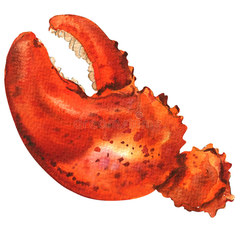 Boiled whole red crab claw isolated, watercolor illustration on white royalty free illustration