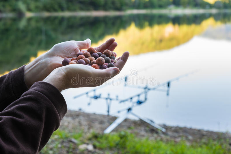 Boilies, bait for carp fishing. Natural bait for carp fishing; as a background a lake and the equipment for carpfishing stock image