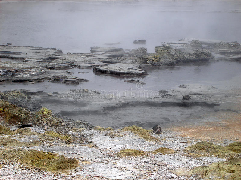 Boiling Pools Of Geothermal Activity, New Zealand Royalty Free Stock Image