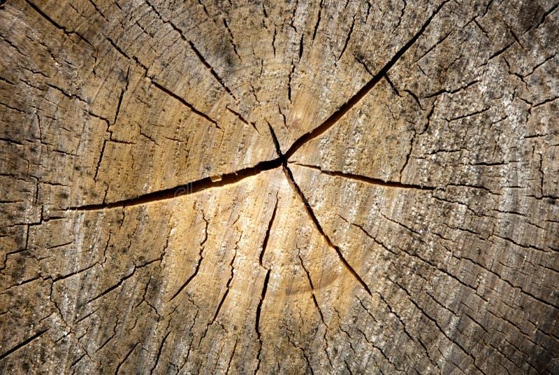 Bois âgé photo libre de droits