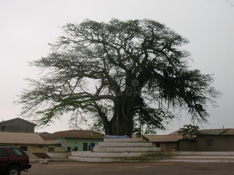 Bois africain photo libre de droits