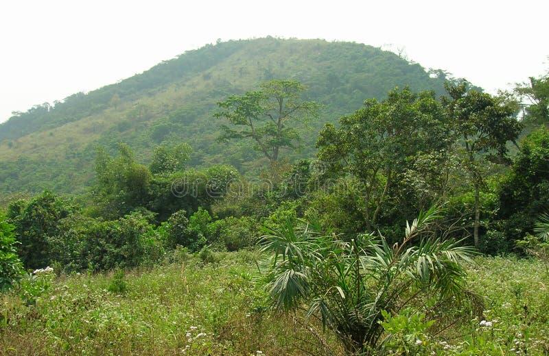 Bois africain, paume image libre de droits