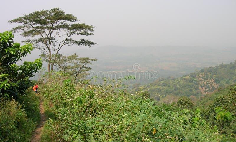 Bois africain, paume photos stock