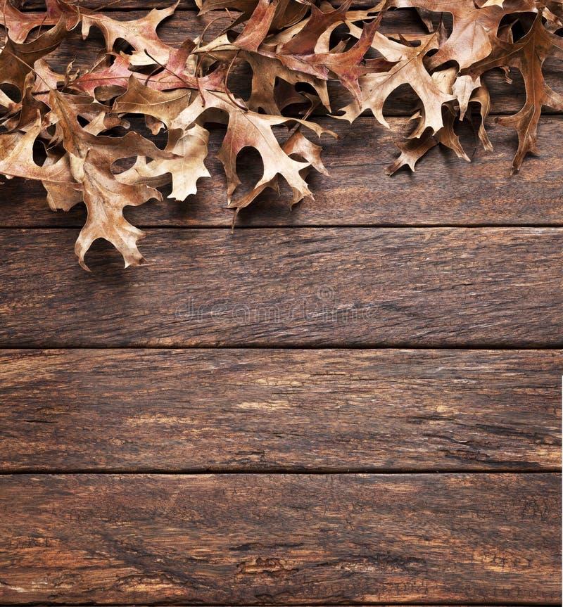 Bois Autumn Background de feuilles photos libres de droits