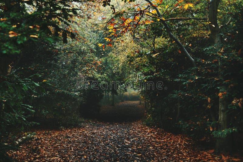 Bois brumeux avec le chemin d'automne photos stock