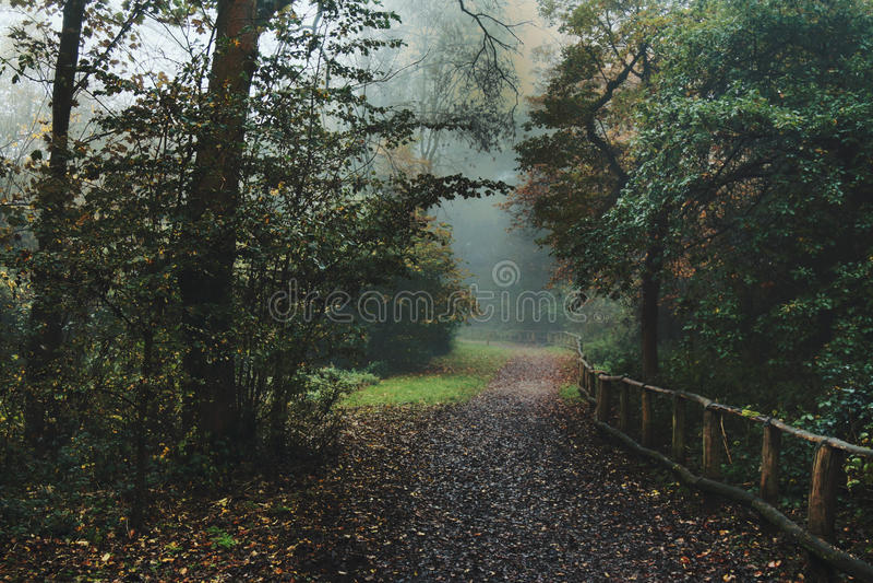 Bois brumeux avec le chemin d'automne photo libre de droits