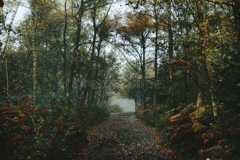 Bois brumeux avec le chemin d'automne photo stock