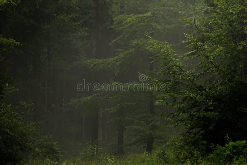 Bois brumeux mystérieux photographie stock