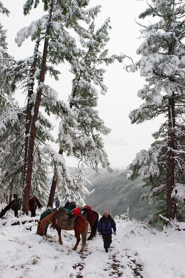 Bois, chevaux et mens blancs. photo stock