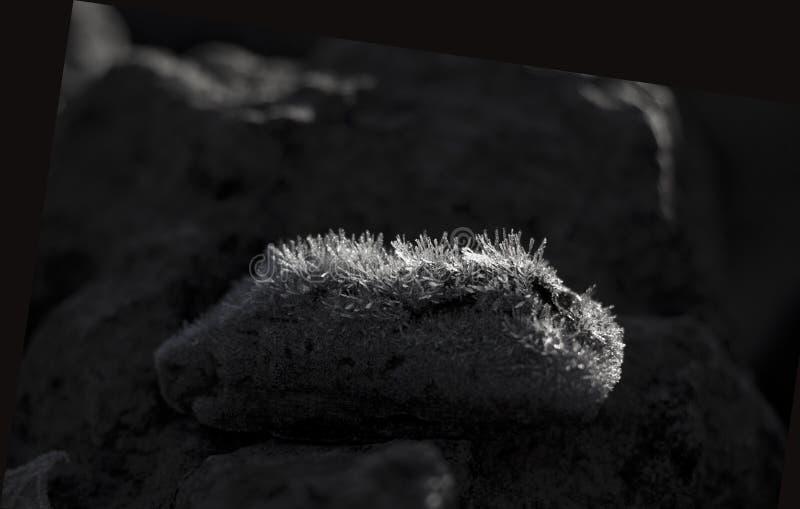 Bois dérive recouvert de gel en noir et blanc photographie stock
