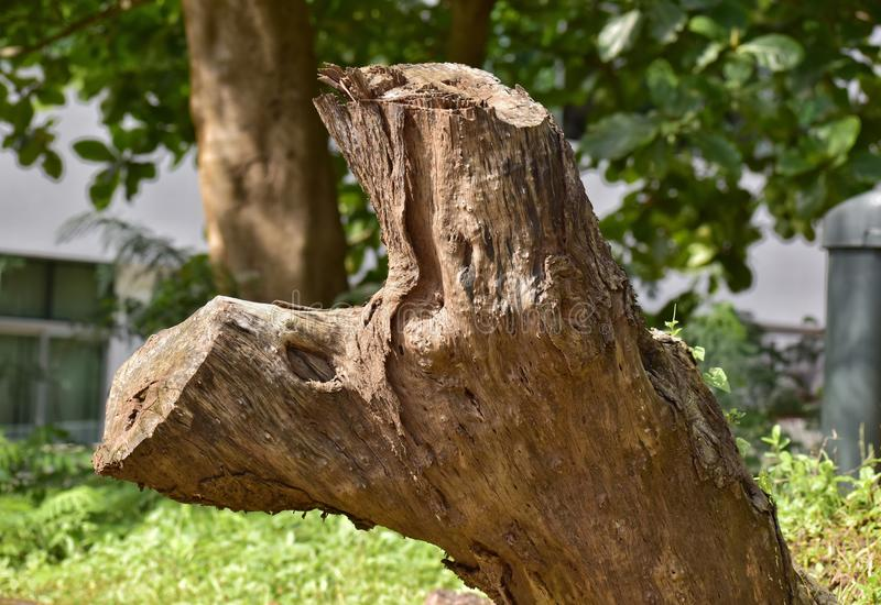 Bois d'arbre photographie stock libre de droits