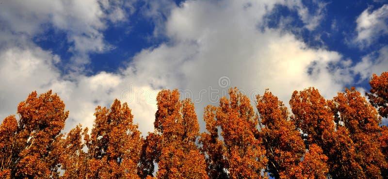 Bois D Automne Image stock