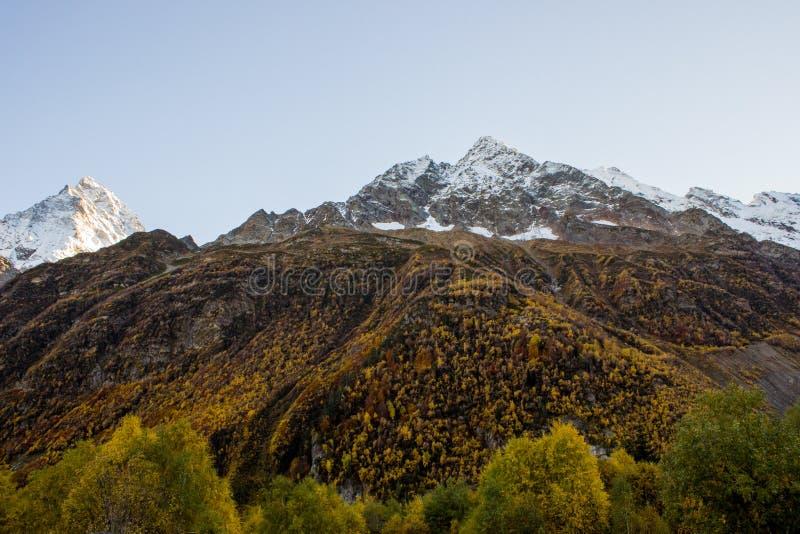 Bois d'or et montagnes couvertes de neige photographie stock libre de droits
