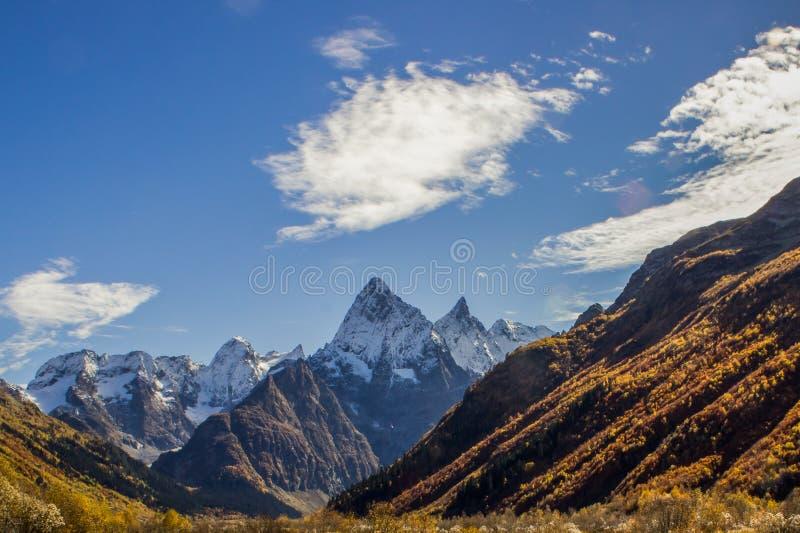 Bois d'or et montagnes couvertes de neige photos libres de droits
