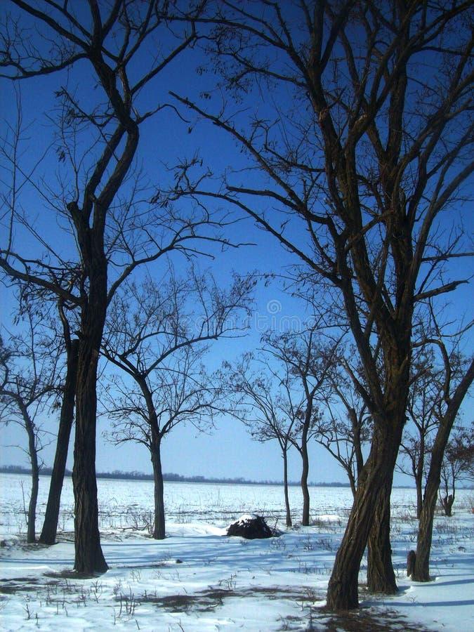 Bois d'hiver photo stock