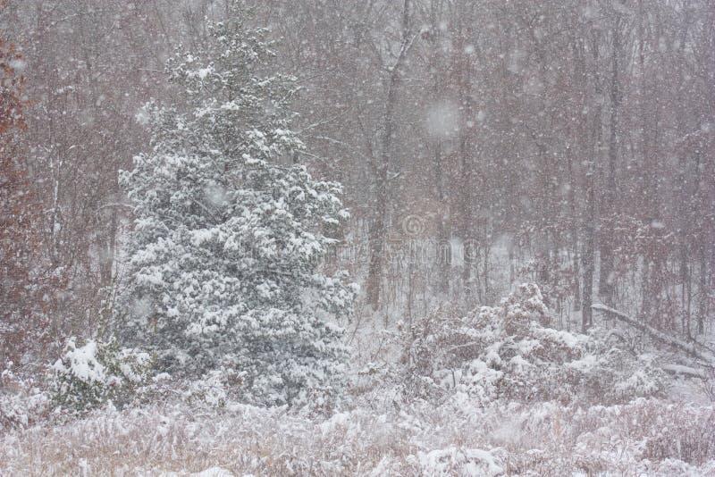 Bois d'hiver photos stock