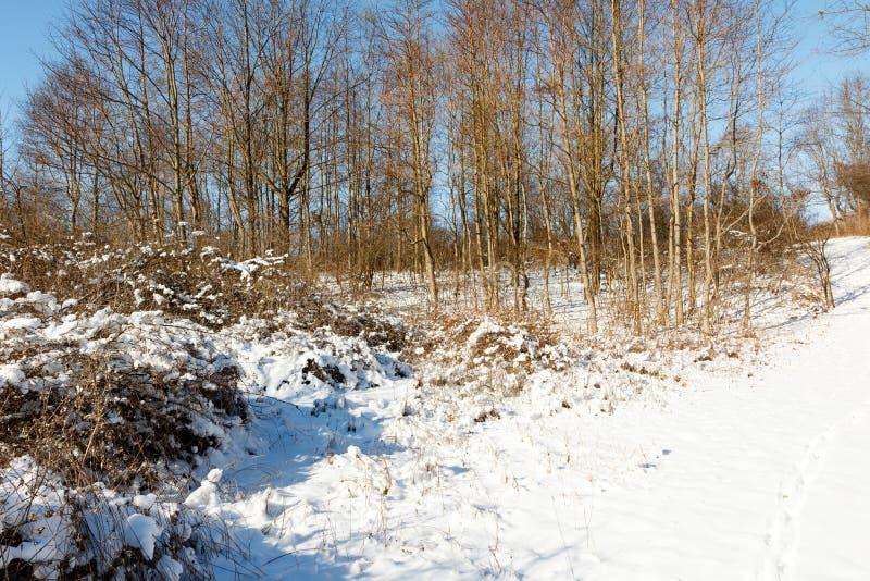 Bois d'hiver pittoresque avec sentier, neige et ciel bleu photographie stock libre de droits