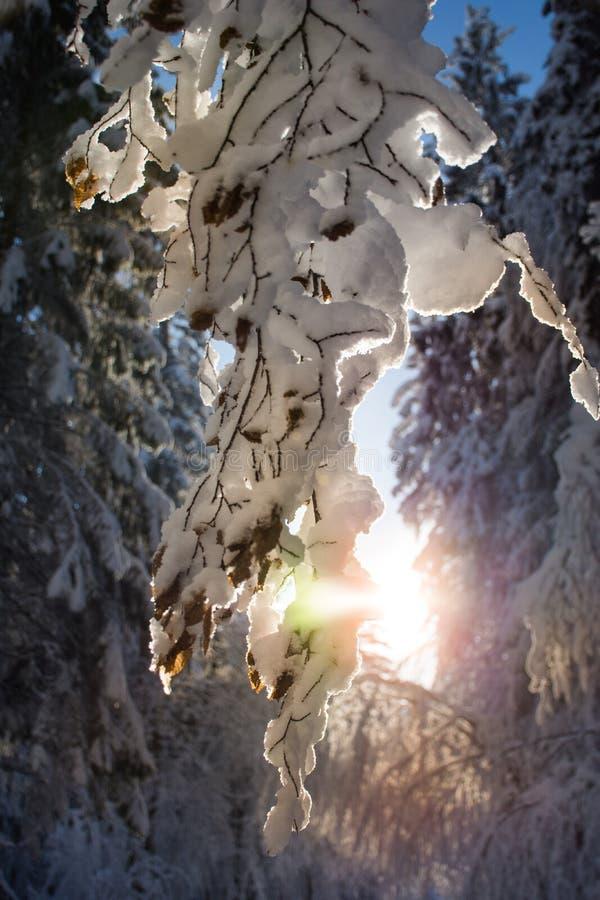 Bois d'hiver sur Sunny Day photo libre de droits