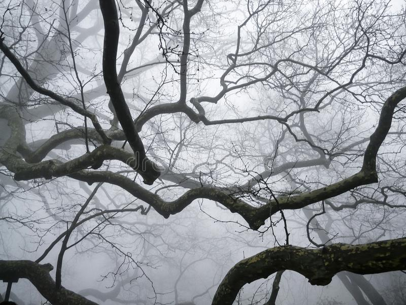 Bois dans le brouillard photos stock