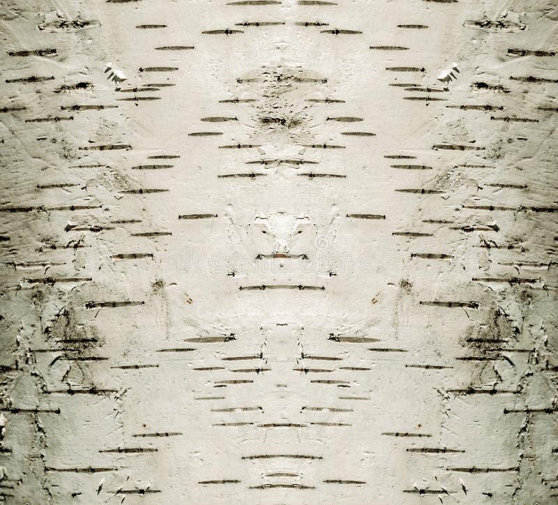 Bois de bouleau d'arbre de cortex de fond image stock