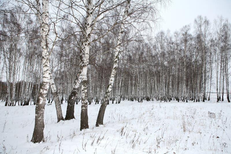 Bois De Bouleau En Hiver Russie Photo libre de droits Image 3389185 # Bois De Bouleau Utilisation