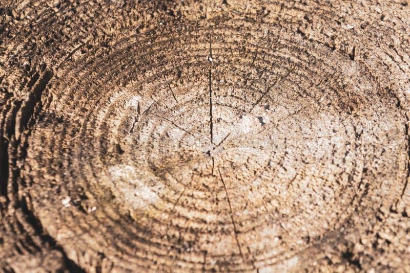 Bois de cercle d'anneau annuel de tranche de texture de woodTree de cercle d'anneau annuel de tranche de texture d'arbre photographie stock libre de droits