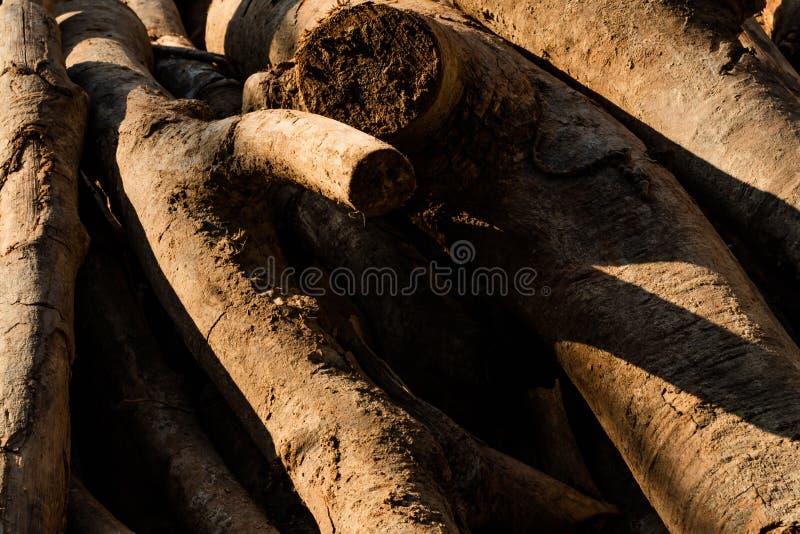 Bois de charpente attendant pour être traité à la scierie lumière du soleil sur la texture photo stock