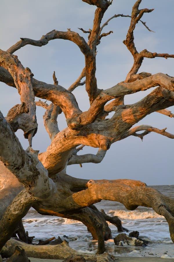 Bois de chassoir à la plage d'océan. images stock