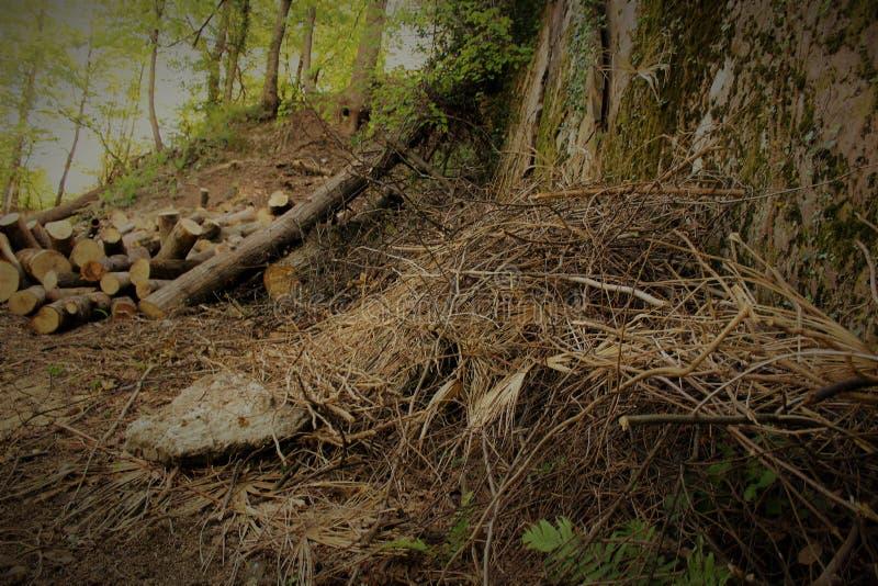 Bois de chauffage dans la forêt photographie stock