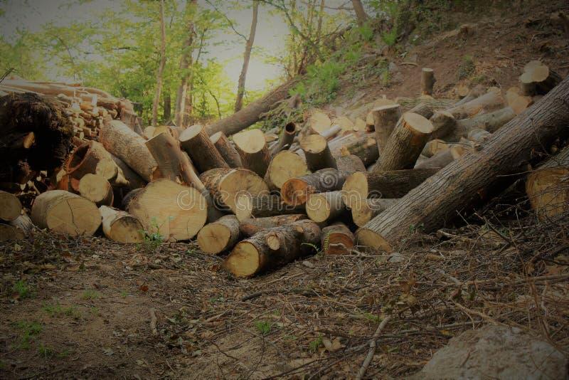 Bois de chauffage dans la forêt photos libres de droits