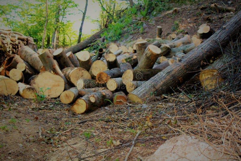 Bois de chauffage dans la forêt images libres de droits